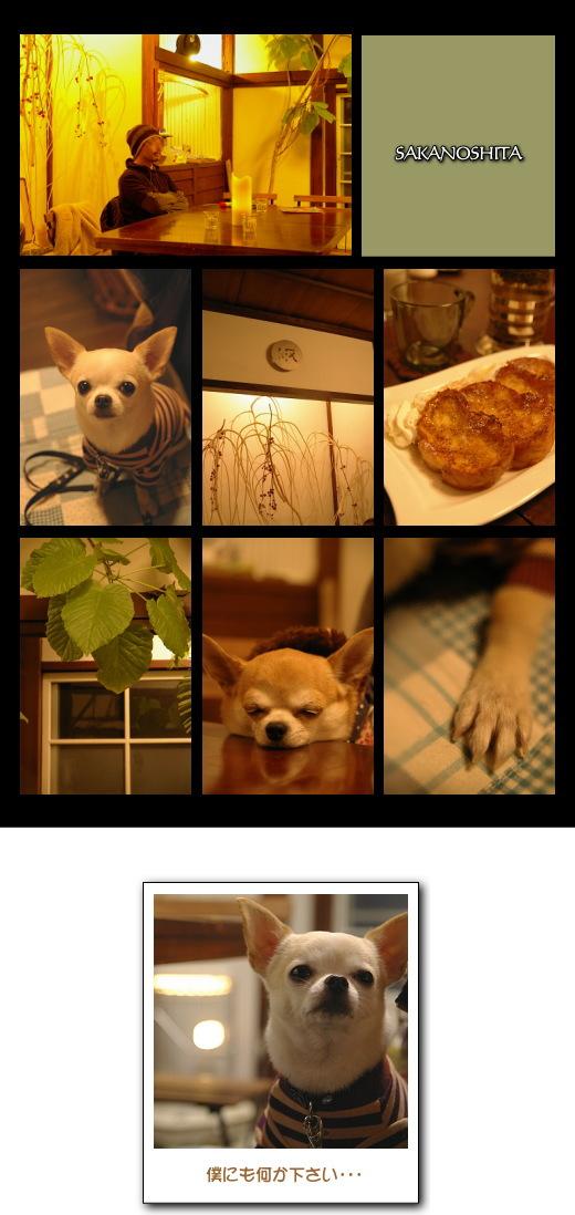 11_20081218060342.jpg