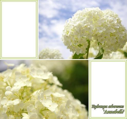 3_20080921054304.jpg