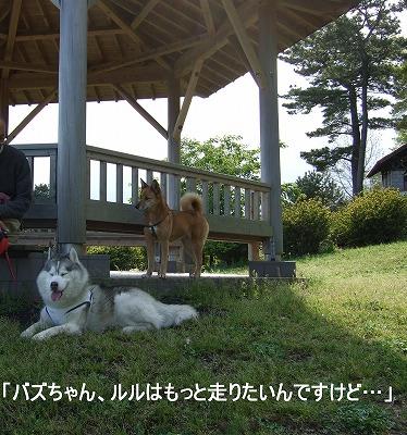 2009_04280005 (2)