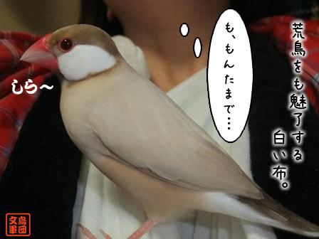 文鳥 011