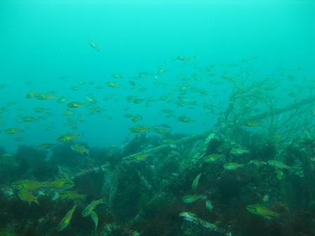 blog_漁礁110709
