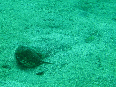 blog_砂に隠れている魚250709