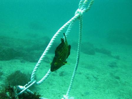 blog_サイケな色の魚250709