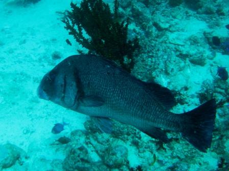 blog_かわいい顔の魚310809