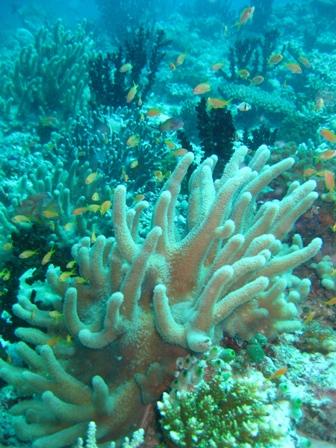 blog_サンゴがキラキラ310809