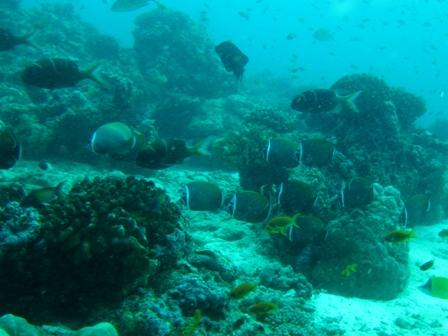 blog_サンゴ礁の魚020909