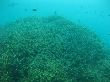 blog_cardinalfish291208.jpg