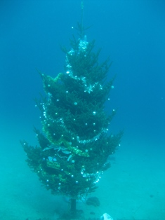blog_christmastree231208.jpg