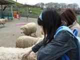 blog_hitsuji050409.jpg