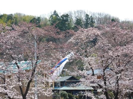 blog_kodomonokuni_ekisakura050409.jpg