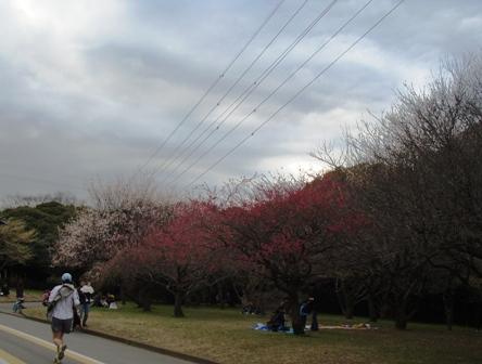 blog_komazawakouen070309.jpg