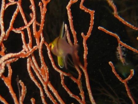 blog_pajamacardinalfishyg301208.jpg