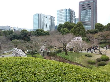 blog_sakuratobiru280309.jpg
