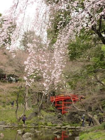 blog_sakuratohashi280309.jpg