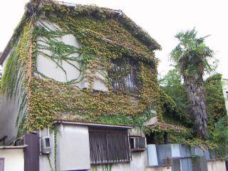junglehouse.jpg