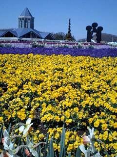 道の駅茂木の花