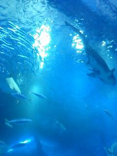 八景島サメ