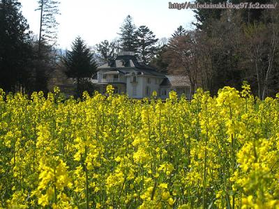 明治の森・道の駅◇青木邸と菜の花