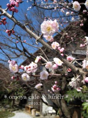omoya cafe&lunch◇店外(庭の桃の木)
