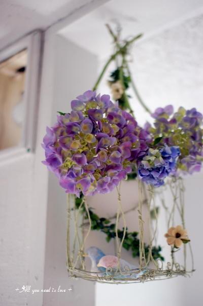 07 紫陽花