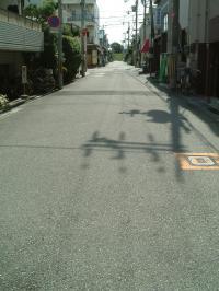 暑い日差し!