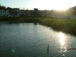夕陽の池2
