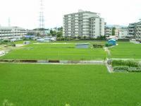田んぼの光景1