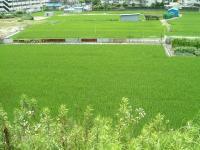 田んぼの光景2
