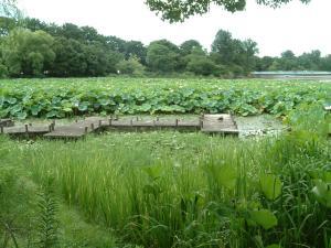 緑地公園3