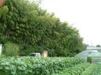 農園の風1