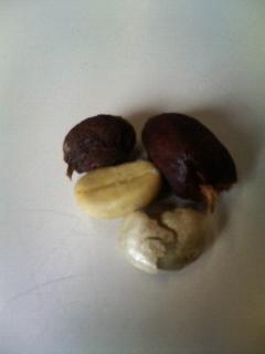 赤い実と殻