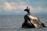 マラウィ湖の鳥