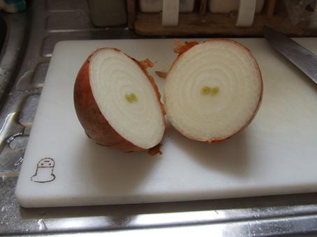 090123 onion