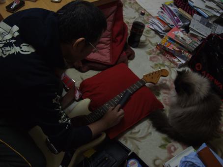 6 090307 ファイリング 猫