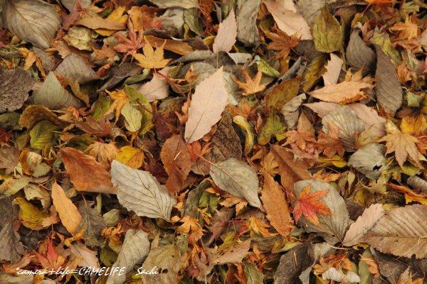 落ち葉のメロディー1011
