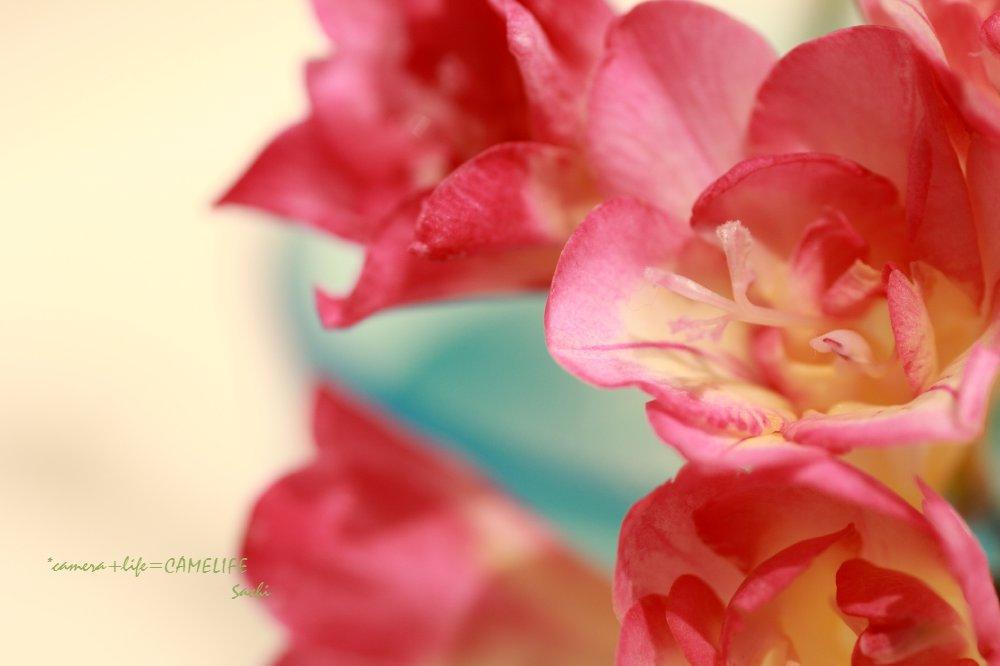 pink-f.jpg