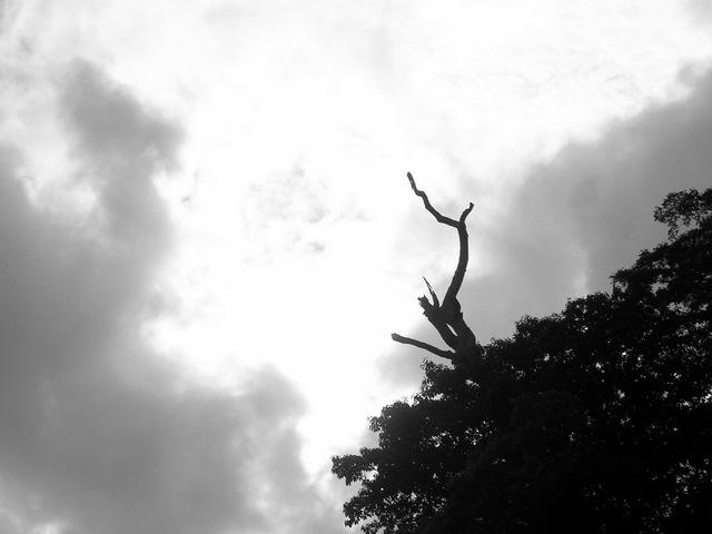 城山の裸木(モノクロ)