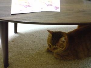 cat41_20080506195423.jpg