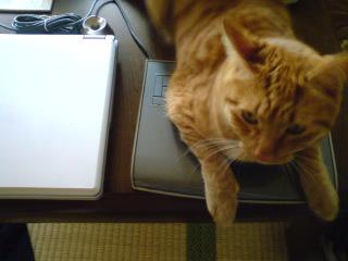 cat48.jpg