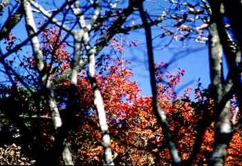 霧島の紅葉web1