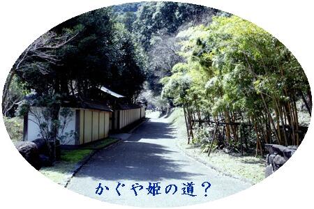 竹林の歩道