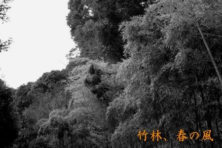 竹林モノクロ