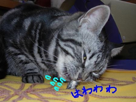20060310221328.jpg