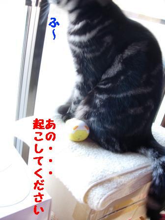 20060323232326.jpg