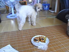 ワタシもケーキ食べたいワン!
