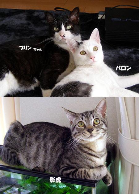 プリン&バロン&影虎