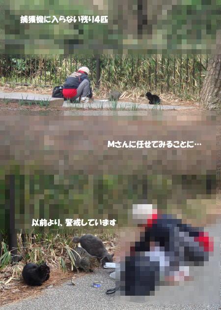 困ったちゃんの猫たち(^_^;)