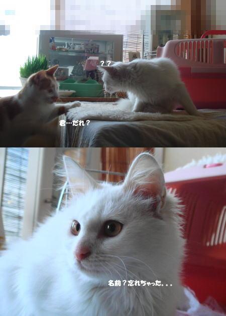 人にも猫にも慣れている!