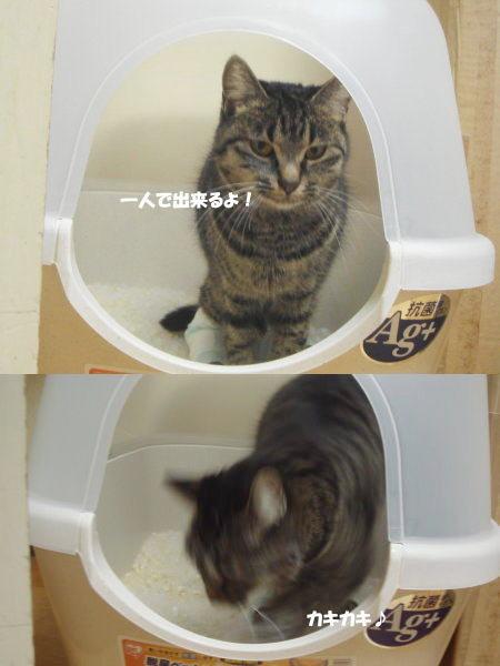 おトイレだって行けます♪