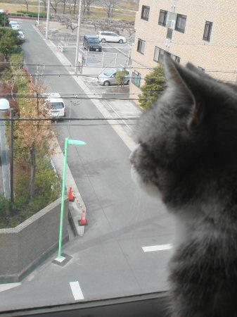 お外を眺めるのが好きです
